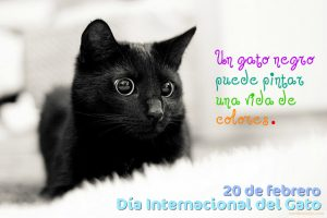 Feliz_D_a_Internacional_del_Gato_20_de_Febrero_212 (1)