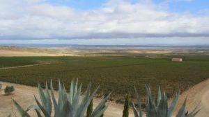 Viñedos en Alfaro. Rioja mediterránea. A.Remesal