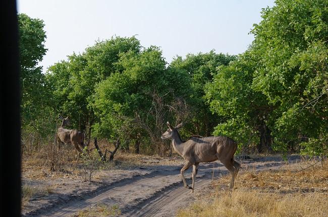 safari-botswana-blog-lavidaenelaire-13