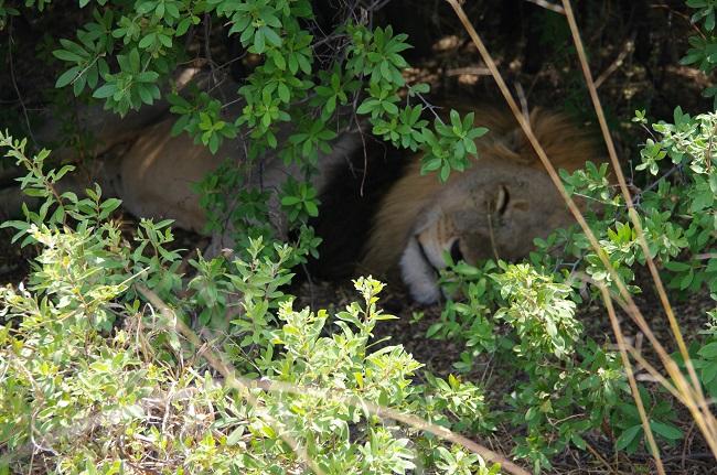 safari-botswana-blog-lavidaenelaire-15