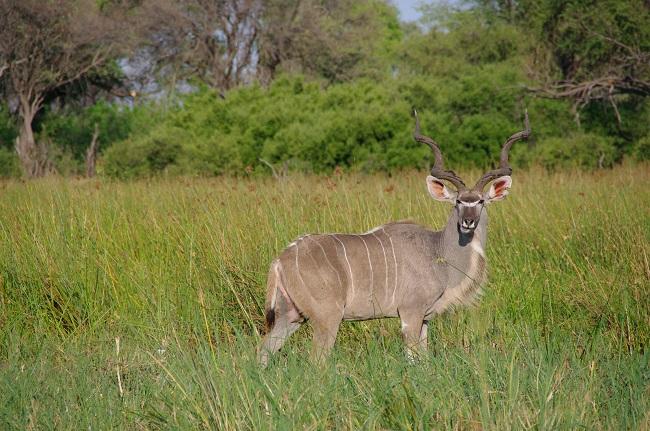safari-botswana-blog-lavidaenelaire-22