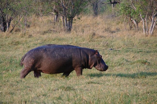 safari-botswana-blog-lavidaenelaire-26
