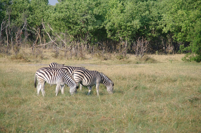 safari-botswana-blog-lavidaenelaire-28