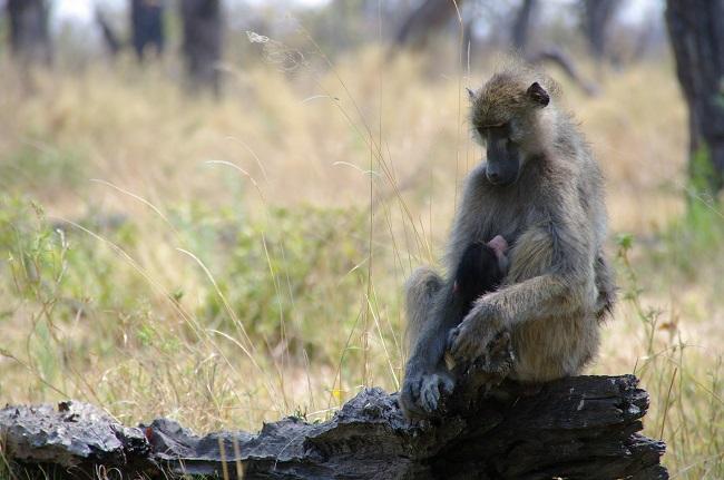 safari-botswana-blog-lavidaenelaire-29