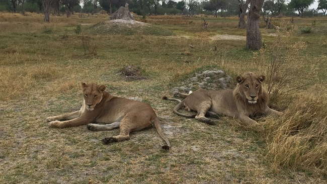 safari-botswana-blog-lavidaenelaire-3