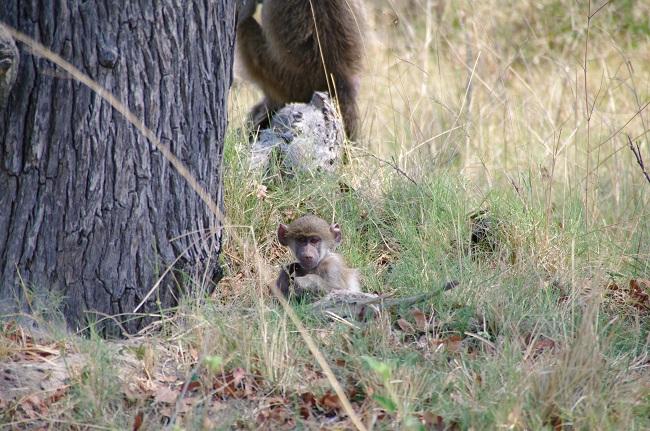 safari-botswana-blog-lavidaenelaire-30