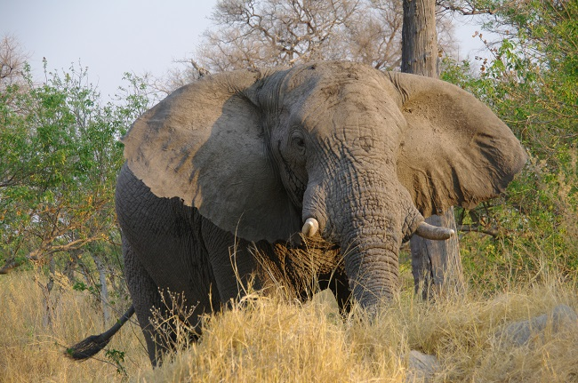safari-botswana-blog-lavidaenelaire-31
