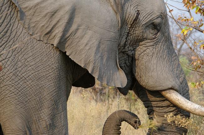 safari-botswana-blog-lavidaenelaire-33