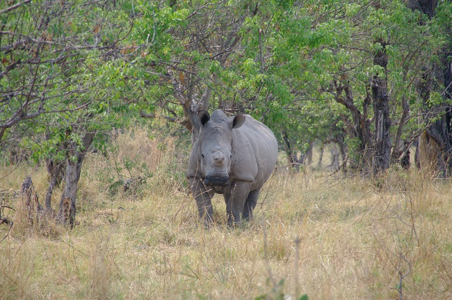 safari-botswana-blog-lavidaenelaire-36