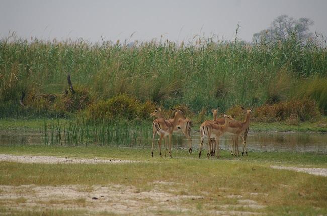 safari-botswana-blog-lavidaenelaire-37