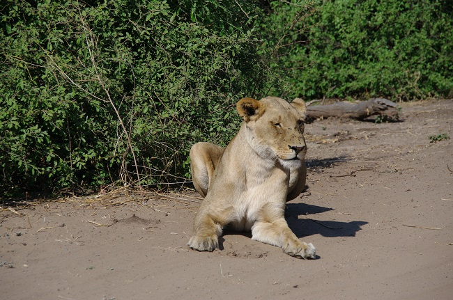 safari-botswana-blog-lavidaenelaire-4