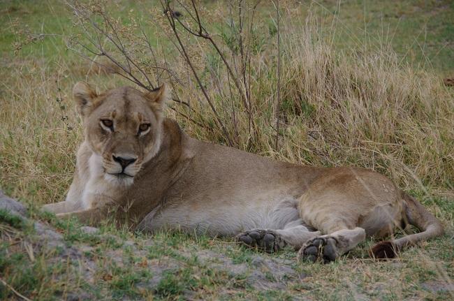 safari-botswana-blog-lavidaenelaire-40