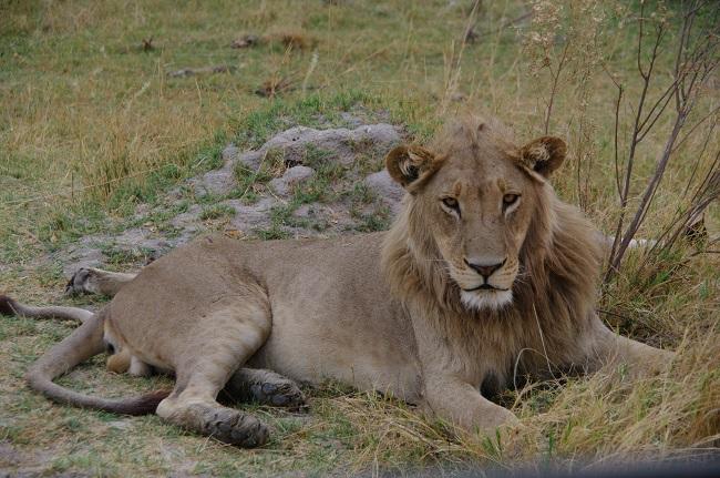 safari-botswana-blog-lavidaenelaire-41