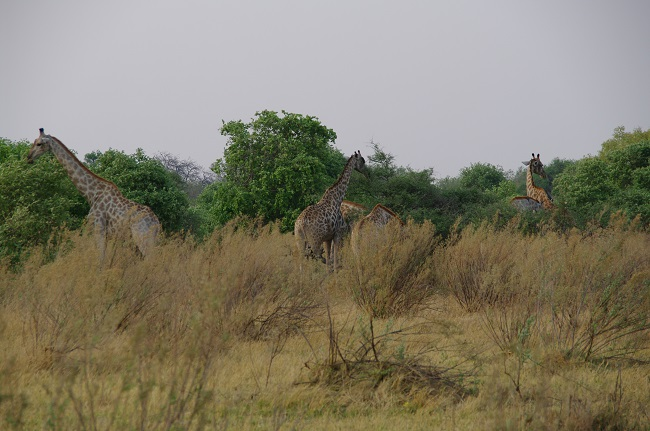 safari-botswana-blog-lavidaenelaire-43